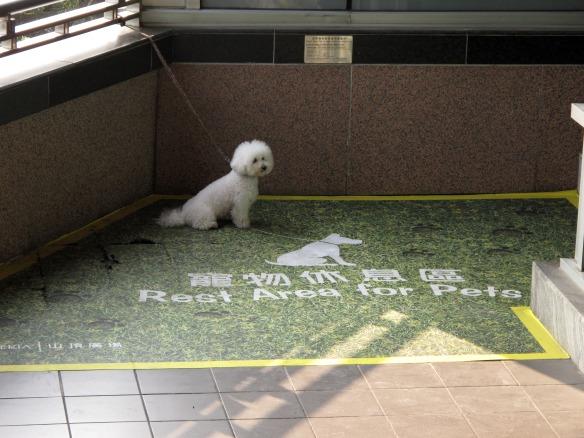 Puppy parking!